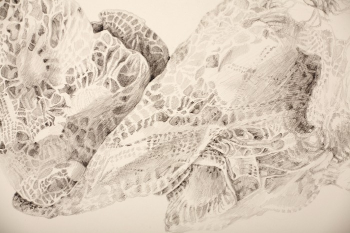 Sawdust and Threads: Lace, pencil on paper, 2016
