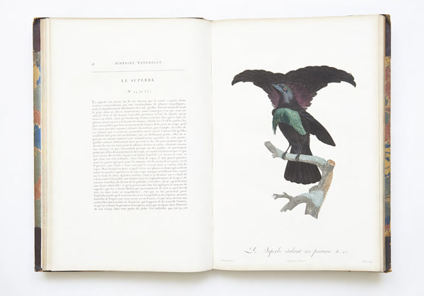 On The Wing, research image