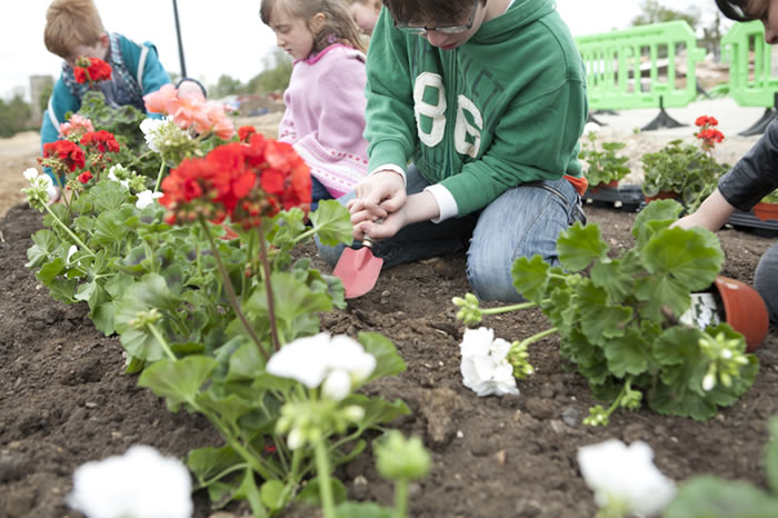 The Do II: planting, geraniums, wild flower seeds, 2012, part of The Do II, community event
