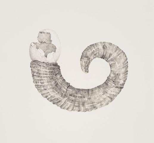 Egg   Horn, graphite on paper, 39cm x 55cm, 2015