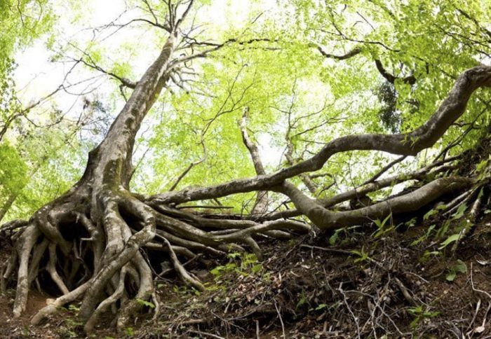 tree and roots
